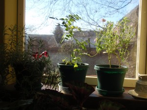 Christmas 2008 - Plants in Winter
